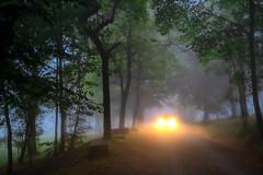 URKIOLA goizez (juan luis olaeta) Tags: fujifilmxt3 photoshop lightroom raw fog forest tree landscape cameraraw basquecountry euskalherria