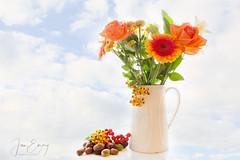 Autumn Still Life (Jamarem) Tags: stilllife tabletop flowers flora gerbera rose berries conkers acorns jug cream orange red autumn texture canoneos70d canonefs1755mm