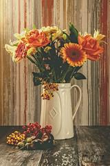 Autumn Still Life (Jamarem) Tags: stilllife tabletop flowers flora gerbera rose berries conkers acorns jug cream orange red autumn photoboard canoneos70d canonefs1755mm