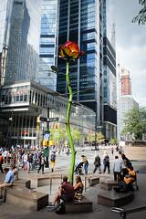 Isa Genzken's Rose III sculpture (ho_hokus) Tags: 2019 fujix20 fujifilmx20 isagenzken manhattan nyc newyorkcity roseiii rosegarden sculpture