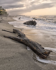 Driftwood (magnetic_red) Tags: beach driftwood sunset nature nopeople palmtrees colombia waves water foam