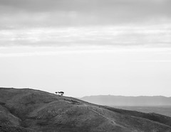 The last trees (JoãoGuerreiro666) Tags: landscape paysage paisagem hill colline mont mountain montagne montanha trees arbre árvore sky ciel céu white blanc branco black noir preto monochrome monochromatique monocromático folgosinho serradaestrela portugal canon eos 6dmarkii joão guerreiro joãoguerreiro666 2019 monte