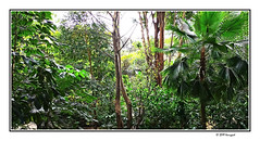 urban forest (harrypwt) Tags: harrypwt smartphone huaweip20pro p20pro bandung indonesia city borders framed trees woods forest green