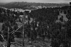 Rankin Ridge with Overcast Skies One May Afternoon (Black & White, Wind Cave National Park) (thor_mark ) Tags: azimuth106 blackwhite blackhills capturenx2edited cloudsaroundhillsides cloudsacrossvalley cloudy colorefexpro evergreentrees evergreens greatplains hiddeninclouds hillsideoftrees landscape lookingeast lowclouds mountains mountainsindistance mountainsoffindistance nature nikond800e northamericaplains outside overcast overcastwithclouds pahásápa ponderosapines portfolio project365 rankinridgenaturetrail rollinghillsides silverefexpro2 southernblackhills trees washunniya windcavenationalpark southdakota unitedstates