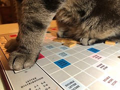 How do you Spell Catbutt? (ruthlesscrab) Tags: cat gato katze kitty chat sasha scrabble boardgame kittytoes