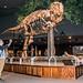 2019 - Road Trip - 75 - Bozeman - 14 - MOR Siebel Dinosaur Complex