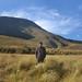 Montane grasslands in the Western Ghats
