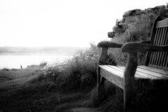 Time passes...and people come, and go (tonguedevil) Tags: outdoor outside countryside autumn nature colour light shadows seaside flowers daisies seat bench view landscape sea water bw
