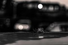 La chute. (LACPIXEL) Tags: chute caída fall leaf hoja feuille automne autumn otoño phare headlight light faro luz coche car voiture rue street calle saison season estación sony noiretblanc blancoynegro blackwhite flickr lacpixel nuit noche night