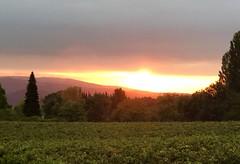 Paisaje de viñedos en Ayegui (eitb.eus) Tags: eitbcom 16599 g154979 tiemponaturaleza tiempon2019 amanecer nafarroa ayegui josemariavega