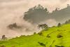_Y2U4470-72.0919.Bản Dọi.Tân Lập.Mộc Châu.Sơn La (hoanglongphoto) Tags: asia asian vietnam northvietnam northernvietnam northwestvietnam landscape scenery vietnamlandscape mocchaulandscape terraces terracedfields terracedfieldsinvietnam mountain flanksmountain morning sunny sunlight morningsunshine cloud hdr canon canoneos1dx canonef70200mmf28lisiiusm tâybắc sơnla mộcchâu tânlập bảndọi phongcảnh ruộngbậcthang buổisáng nắng nắngsớm ruộngbậcthangmộcchâu phongcảnhmộcchâu núi sườnnúi mây theforest rừng