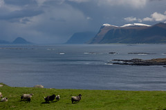 somewhere only we know (e-box 65) Tags: sheep norway runde sea mountain island nikon 16 80
