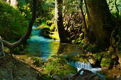 Fließend (KaAuenwasser) Tags: brühlbach bach badurach uracherwasserfall wasserfall fliesend gewässer natur steine felsen bäume baum wasser