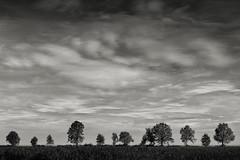 Eine Reihe von Bäumen (StefanB) Tags: tree germany deutschland treescape ries schwaben 2019 em5 1235mm bäume baum baumreihe