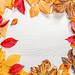Frame of bright colorful autumn leaves on a white wooden background