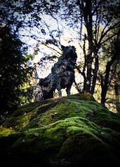 Wolf Lookout (Karoline Evensen) Tags: norway vestfold art artinstallation artwork autumn fall forest moss nature stiforøye ulv varg wolf woods