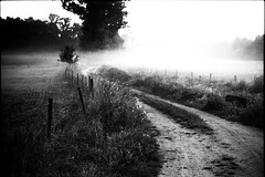 (no49_pierre) Tags: desaturated expired film 35mm landscape monochrome blackandwhite
