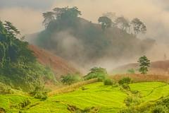 _Y2U4473-75.0919.Bản Dọi.Tân Lập.Mộc Châu.Sơn La (hoanglongphoto) Tags: asia asian vietnam northvietnam northernvietnam northwestvietnam landscape scenery vietnamlandscape mocchaulandscape terraces terracedfields terracedfieldsinvietnam mountain flanksmountain morning sunny sunlight morningsunshine hdr canon canoneos1dx canonef70200mmf28lisiiusm tâybắc sơnla mộcchâu tânlập bảndọi phongcảnh ruộngbậcthang buổisáng nắng nắngsớm ruộngbậcthangmộcchâu phongcảnhmộcchâu núi sườnnúi mist sươngmù earlyfrost earlymorningfog sươngsớm theforest rừng happyplanet asiafavorites