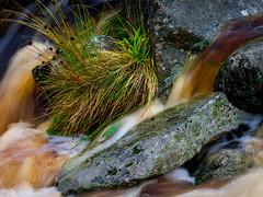 Water Rocks and Grass (kckelleher11) Tags: 2019 40150mm ireland olympus september em1 f28 flowing grass mzuiko omd stream water wicklow