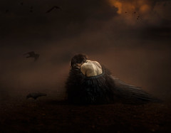 Broken Wing ({jessica drossin}) Tags: jessicadrossin fine art alone dark broken wing feathers bird ravens crows sky wwwjessicadrossincom
