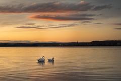 time to sleep (Sebo23) Tags: bodensee lakekonstanz gundholzen reflection naturaufnahme sonnenuntergang canoneosr
