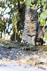Grimace de chat (Seb. Del.) Tags: chat cat félin animal