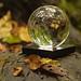 Lensball in the (wet) woods
