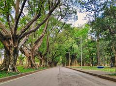 Parque Ibirapuera, São Paulo (Tayon) Tags: cellphone xiaomi pocophone ibirapuera saopaulo brasil parque relax