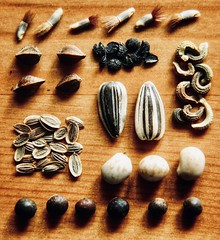 Seed collection (tanith.watkins) Tags: collection seeds knolling macromondays