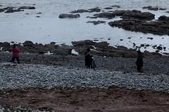 the clean-up CRRU... (walter.innes) Tags: walterinnes crru beachclean crovie moraycoast aberdeenshire