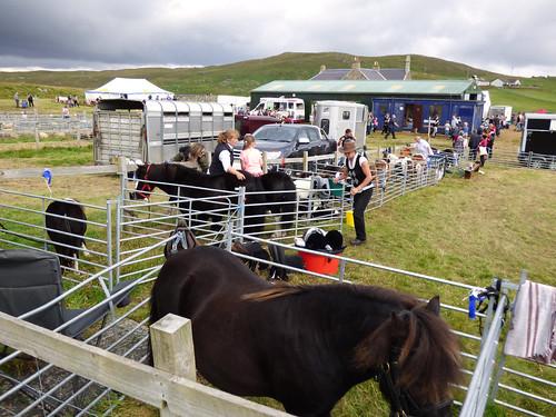 Walls Show - Shetland ponies (4)