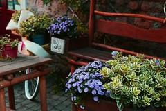 Flowers (unciclamino) Tags: italia italy flowers umbria orvieto