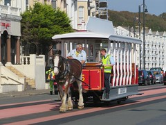 Douglas Trammer (deltrems) Tags: douglas isleofman mann trammer horsedrawn tram public transport