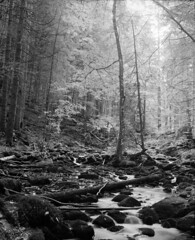 Kleine Ohe (str.ainer) Tags: bach bergbach wildbach stream mountainstream nationalpark bayerischerwald bavarianforest mamiya rb67 sekorc90mm ilford fp4 adox fx39