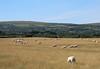 Pembrokeshire Coast Path - Day 2 (Elisa1880) Tags: pembrokeshire coast path wales dinas island cross newport parrog aber forest pwllgwaelod schaap schapen sheep landschap landscape