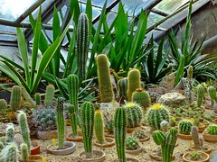 Kakteen - botanischer Garten in Breslau (fleckchen) Tags: kakteen kaktus botantischergarten garten gärten park parklandschaft parklandschaften parkanlage gewächse pflanzen breslau kakteengewächse cactaceae wrocław polen parks botanischergartenbreslau