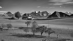 RM-2019-365-272 (markus.rohrbach) Tags: thema fotografie schwarzweis natur landschaft berg niesen objekt bauwerk gebäude haus blümlisalp pflanze baum projekt365