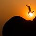 Zimbabwe Jump