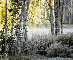 Morning Frost in Yellowstone (mahar15) Tags: yellowstonenationalpark morning landscape nature nationalpark frost outdoors trees wyoming