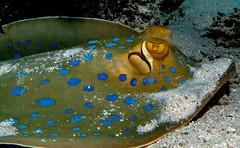 P1020692 (nxdamian) Tags: under water photography uwphotography unterwasserfotografie unterwasser underwater undersea sea life marine nature fish school fischschwarm kleinfische schwertfische lichteinfall travel scuba diving wide angle perspective lumix lx10 lx15 red egypt tauchen duiken hurghada onderwater diveresort buceo 1world1ocean underwaterworld plongee ocean scubadiver fotografia podwodna