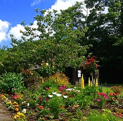 Laxey 2 (BrooksieC) Tags: isleofman laxey gardens flowers trees sky nature