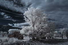 Abandoned Cabin In The Eastern Sierras - Infrared (Bill Gracey 25 Million Views) Tags: infrared infraredphotography ir convertedinfraredcamera easternsierras cabin bishop landscape surreal trees clouds