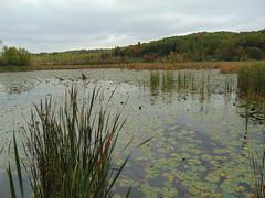 Réal-D.-Carbonneau marsh (Quevillon) Tags: estrie easterntownships cantonsdelest canada québec sherbrooke maraisréaldcarbonneau park marsh fleurimont