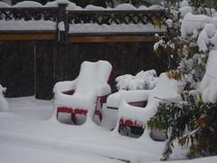 The garden 10 days on (davebloggs007) Tags: hbm happy bench monday