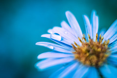 Blossom blues. (Un instant.) Tags: beyondbokeh bokeh fujian 35mm17