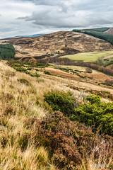 "Splendid ecology of Scotland near Corgarff Castle and Strathavon. (Scotland by NJC.) Tags: hill تَلّ colina 小山 brdo kopec bakke forhøjning landskabet heuvel mäki colline hügel λόφοσ collina 丘 언덕 ås wzgórze deal холм backe เขาเตี้ยๆ tepe coğrafya пагорб đồi forest woodland plantation trees bos ""bosque grande"" metsä forêt δάσοσ foresta skog autumn الـخَرِيف outono 秋天 jesen podzim efterår herfst otoño 秋 가을 høst jesień höst sonbahar fall corgarff strathavon moray scotland"