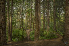 Which way 2019 (TheArtOfPhotographyByLouisRuth) Tags: tree forest wood green fern nature landscape louisruthphotography nikond810 24mmf18 morninglight tranquil tranquility