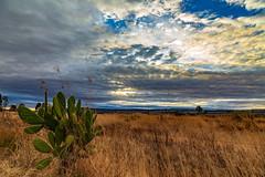 Dryland (FVillalpando) Tags: drylands sunrise clouds sky grass nopalcactus light landscape nature