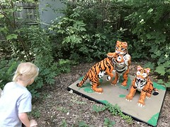 """Dani Looks at Lego Tiger Cubs • <a style=""""font-size:0.8em;"""" href=""""http://www.flickr.com/photos/109120354@N07/48817315171/"""" target=""""_blank"""">View on Flickr</a>"""