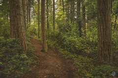 Trails and trees 2019 (TheArtOfPhotographyByLouisRuth) Tags: tree treemendous nikond810 nature lighting wood tranquil landscape